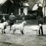 Expozitie de capre